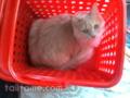 [cat]残り持って干しに行ってたら、猫入りで脱力