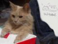 [cat]コタツの猫2