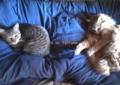[cat]距離感!