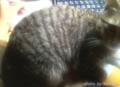 [cat]机で寝るやつ