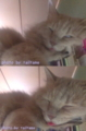 [cat]白目&舌出し