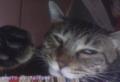 [cat]半目。よだれ付いたら困るので起こした