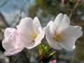 f:id:tailyoku-kanfu:20111021090835j:image:medium