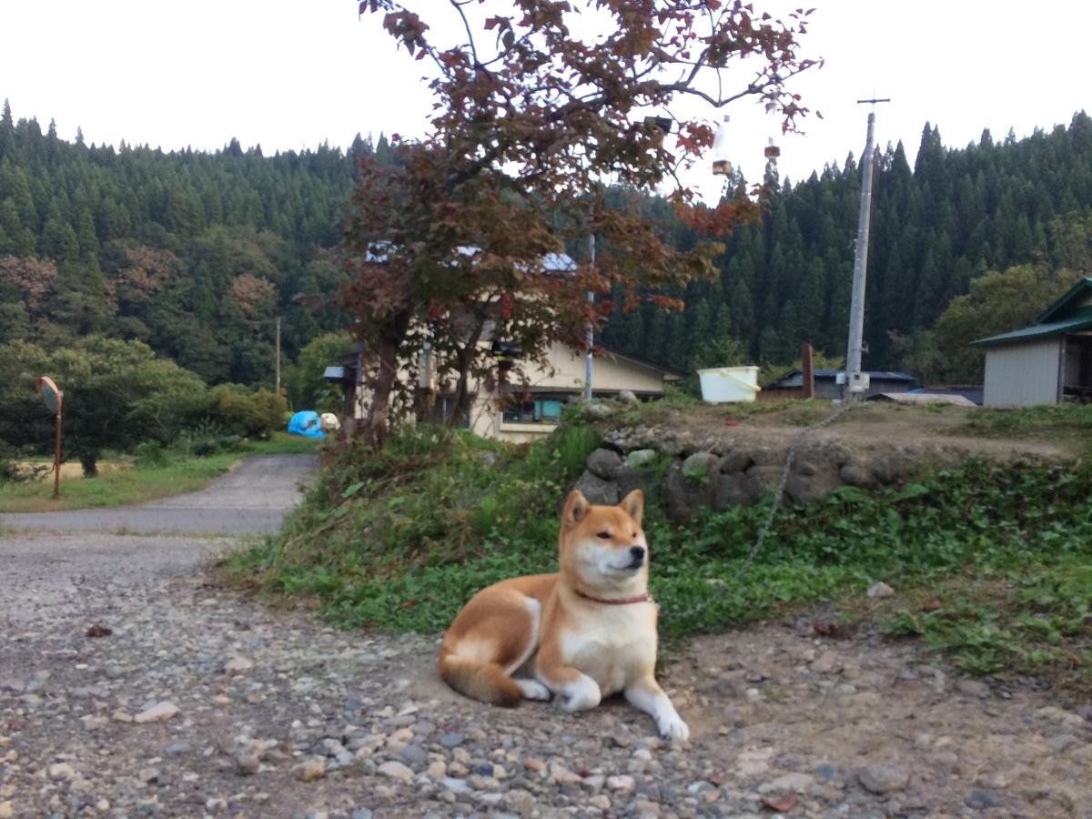f:id:tainosashimi:20191001185939j:plain