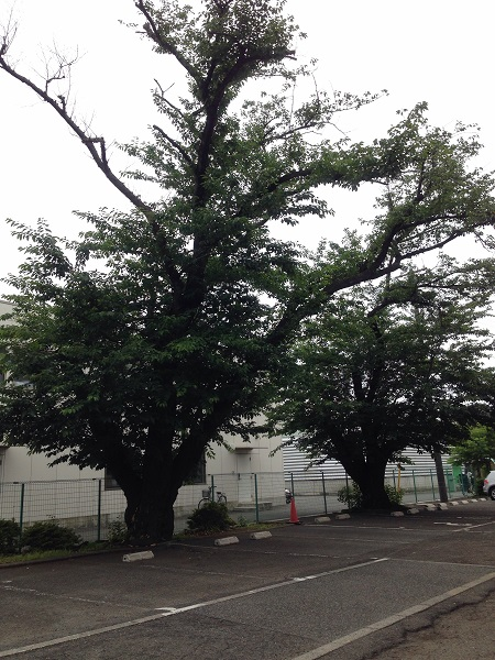 f:id:taishochikusen:20160624093325j:plain