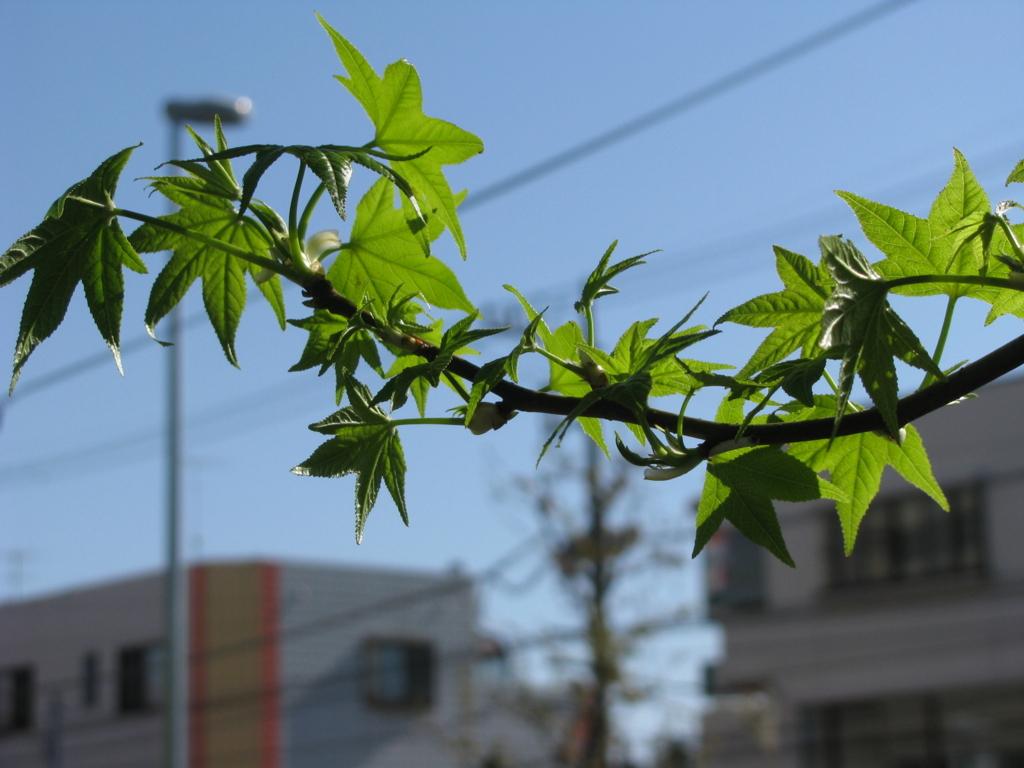 f:id:taishochikusen:20170419161218j:plain
