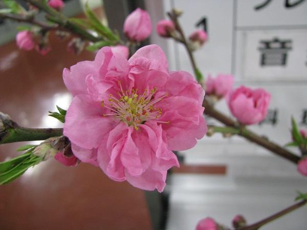 f:id:taishochikusen:20180310144834j:plain