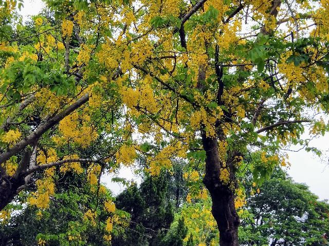 f:id:taiwaninaka:20200616083133j:image