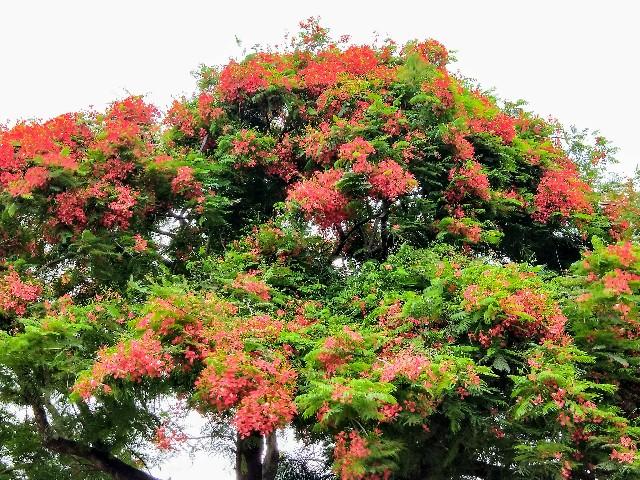 f:id:taiwaninaka:20200616083155j:image