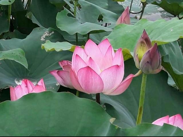 f:id:taiwaninaka:20200616083216j:image