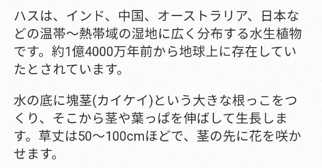 f:id:taiwaninaka:20200617082830j:image
