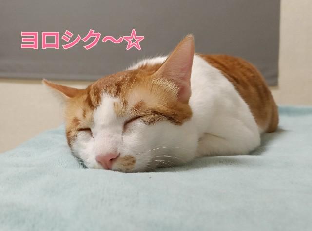 f:id:taiwaninaka:20210514175350j:image