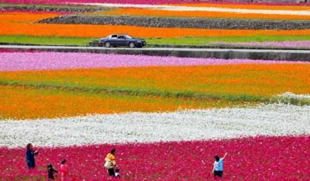 f:id:taiwaninaka:20210617235259j:image