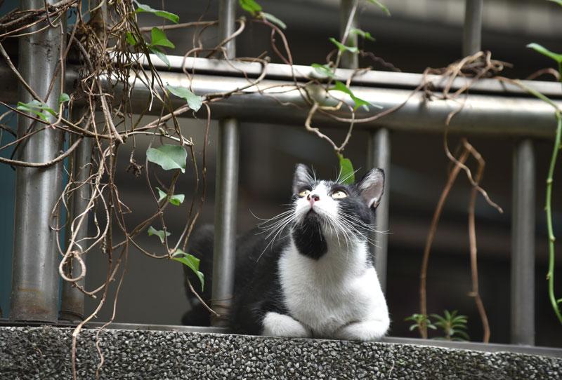 f:id:taiwanokinawa:20161031211528j:plain