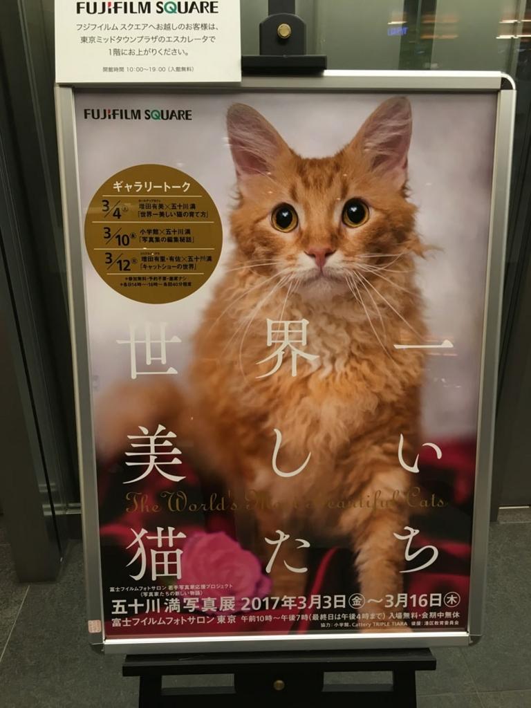 五十川満 写真展「世界一美しい猫たち」を見に六本木に行ってきた