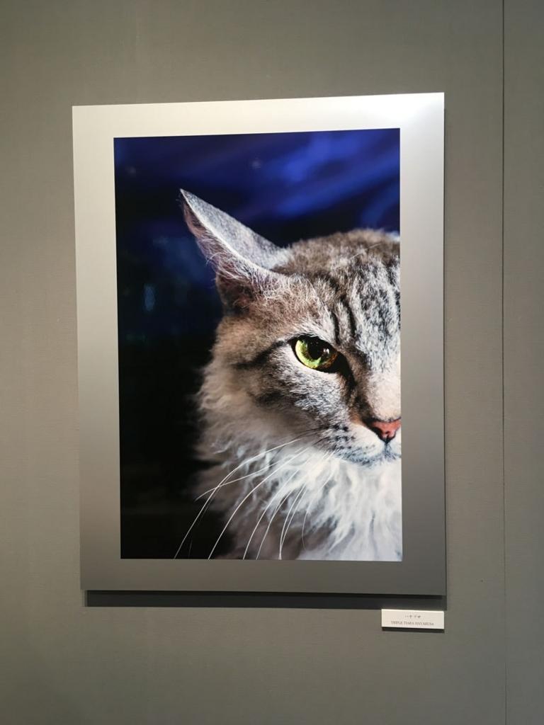 五十川満 写真展「世界一美しい猫たち」を見に六本木に行ってきた01