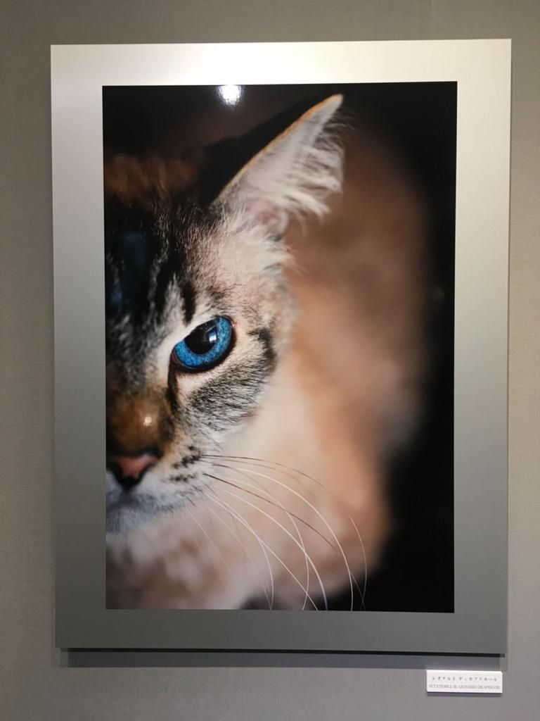 五十川満 写真展「世界一美しい猫たち」を見に六本木に行ってきた02