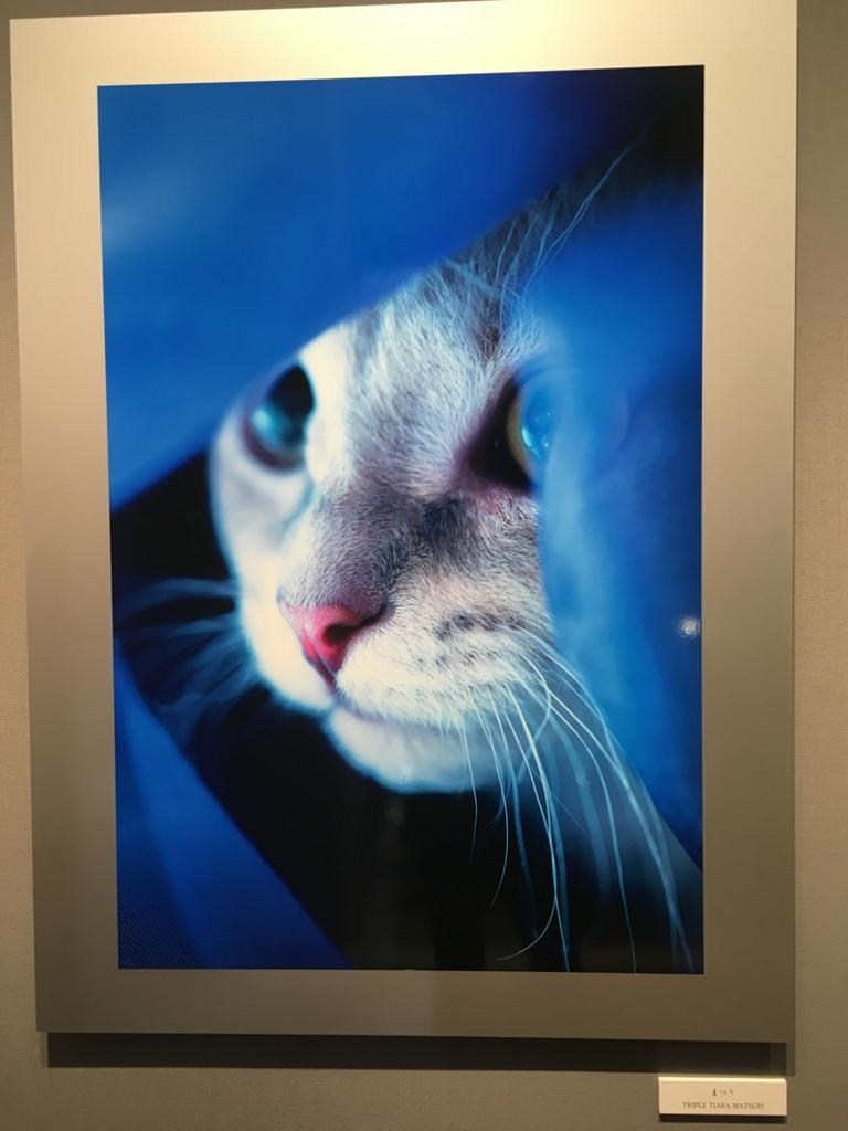 五十川満 写真展「世界一美しい猫たち」を見に六本木に行ってきた05