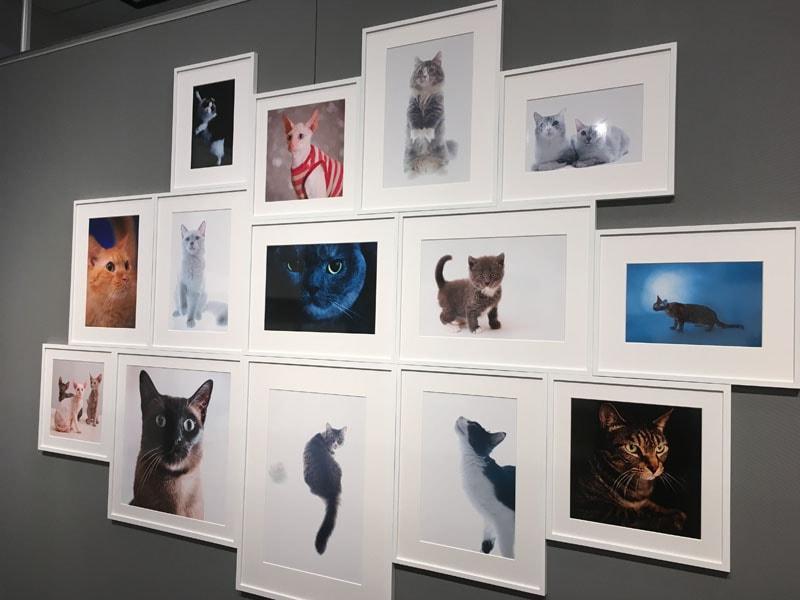 五十川満 写真展「世界一美しい猫たち」を見に六本木に行ってきた07