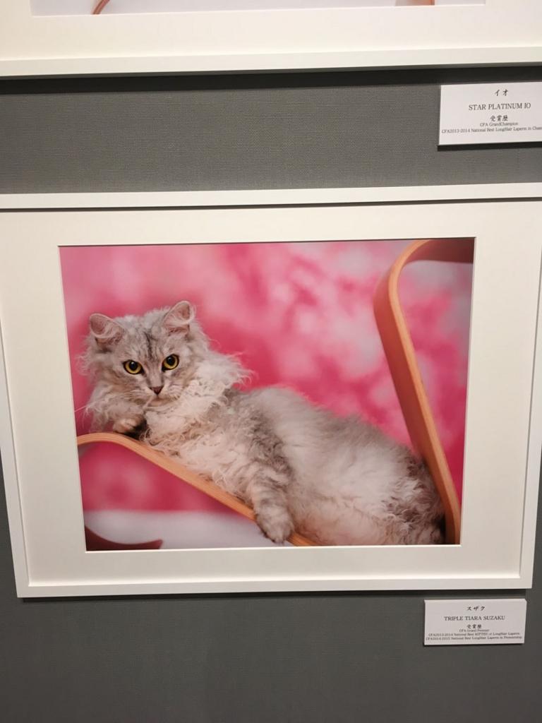 五十川満 写真展「世界一美しい猫たち」を見に六本木に行ってきた10
