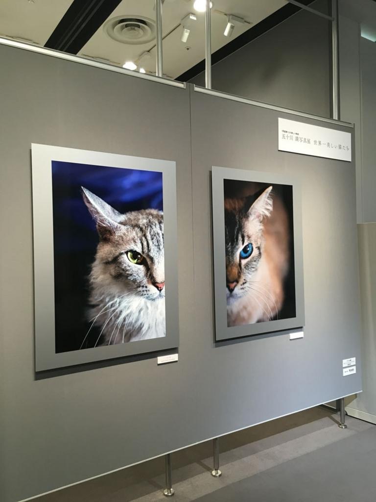 五十川満 写真展「世界一美しい猫たち」を見に六本木に行ってきた12
