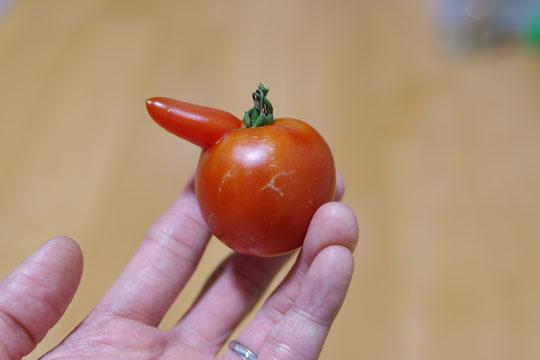 奇形のトマト