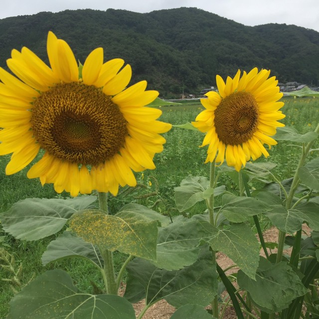 f:id:taka-ku-22:20170728200711j:image
