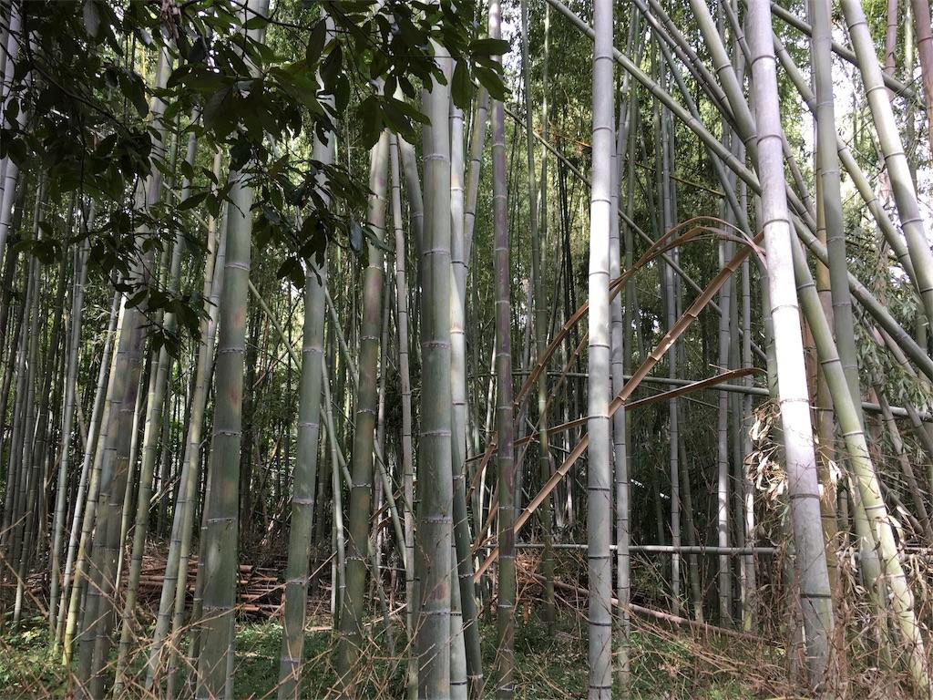 f:id:taka-s2-appekusu112:20181005130708j:image