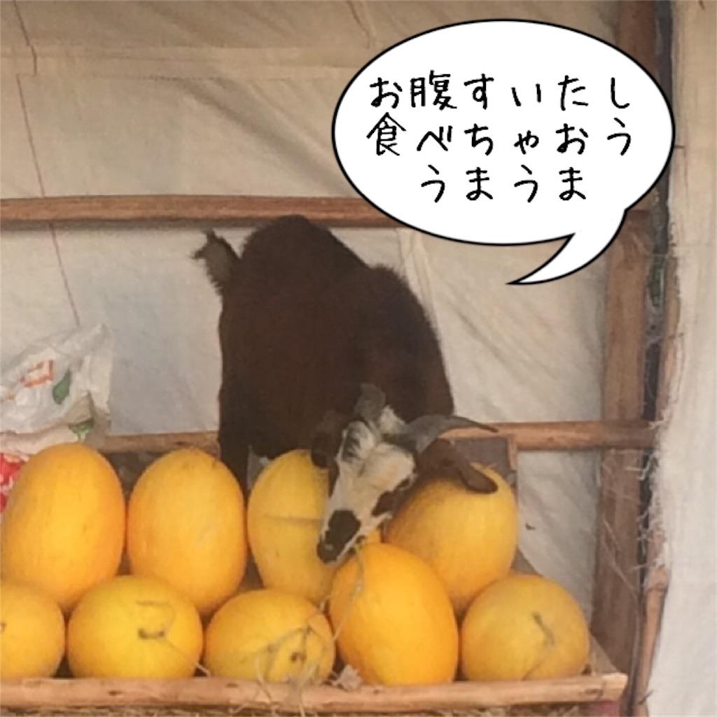 f:id:taka-shikao:20190728180426j:image