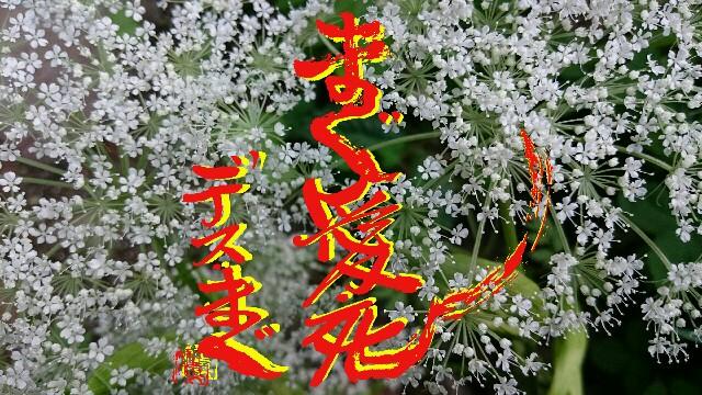 f:id:taka664:20160905075402j:image