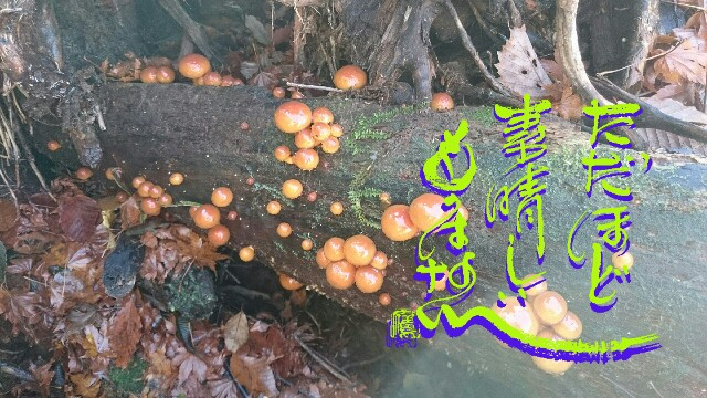 f:id:taka664:20161120130554j:image