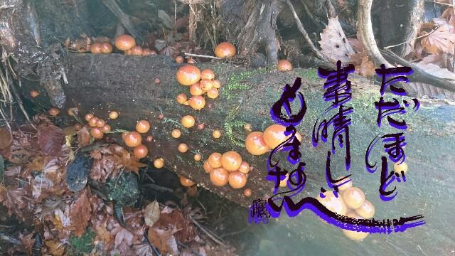 f:id:taka664:20161120130821j:image