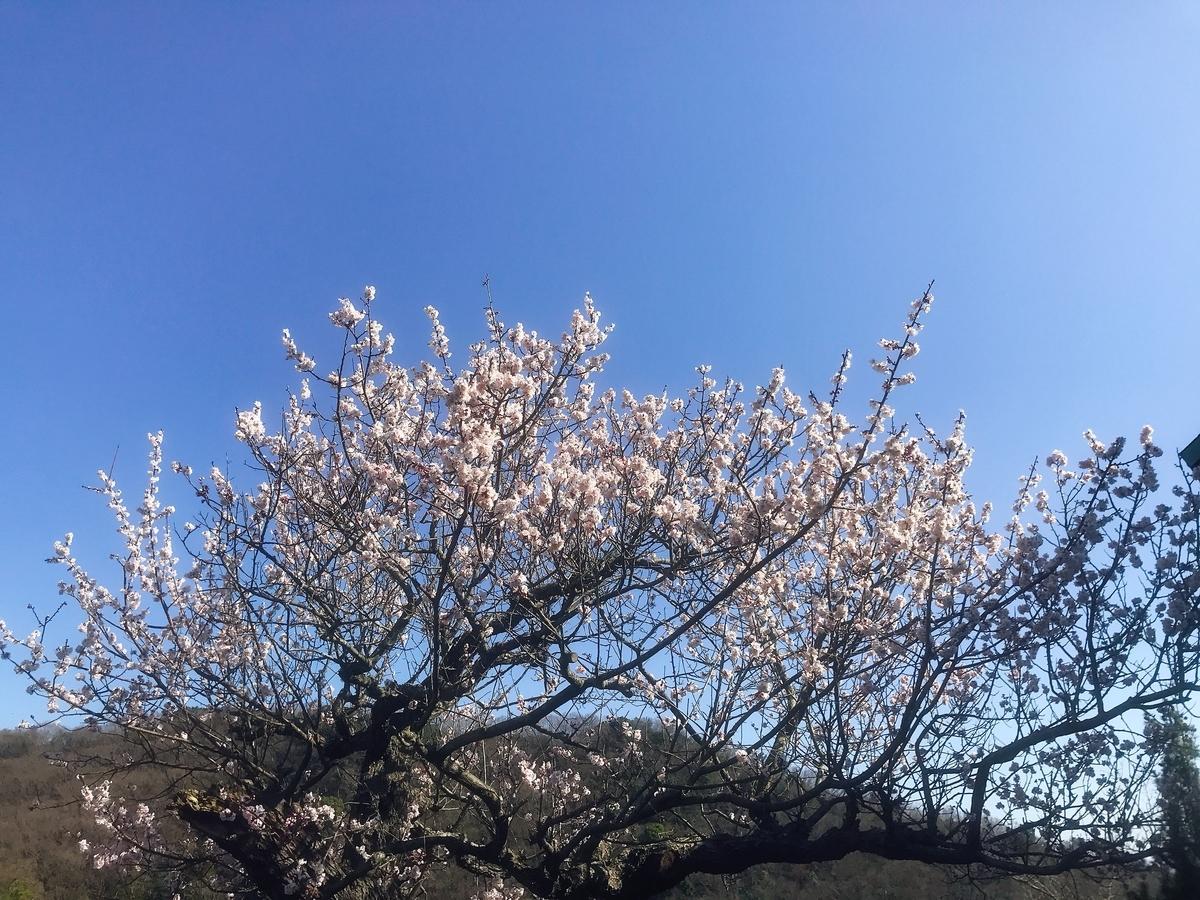緑花センターの入園口の横の梅の木