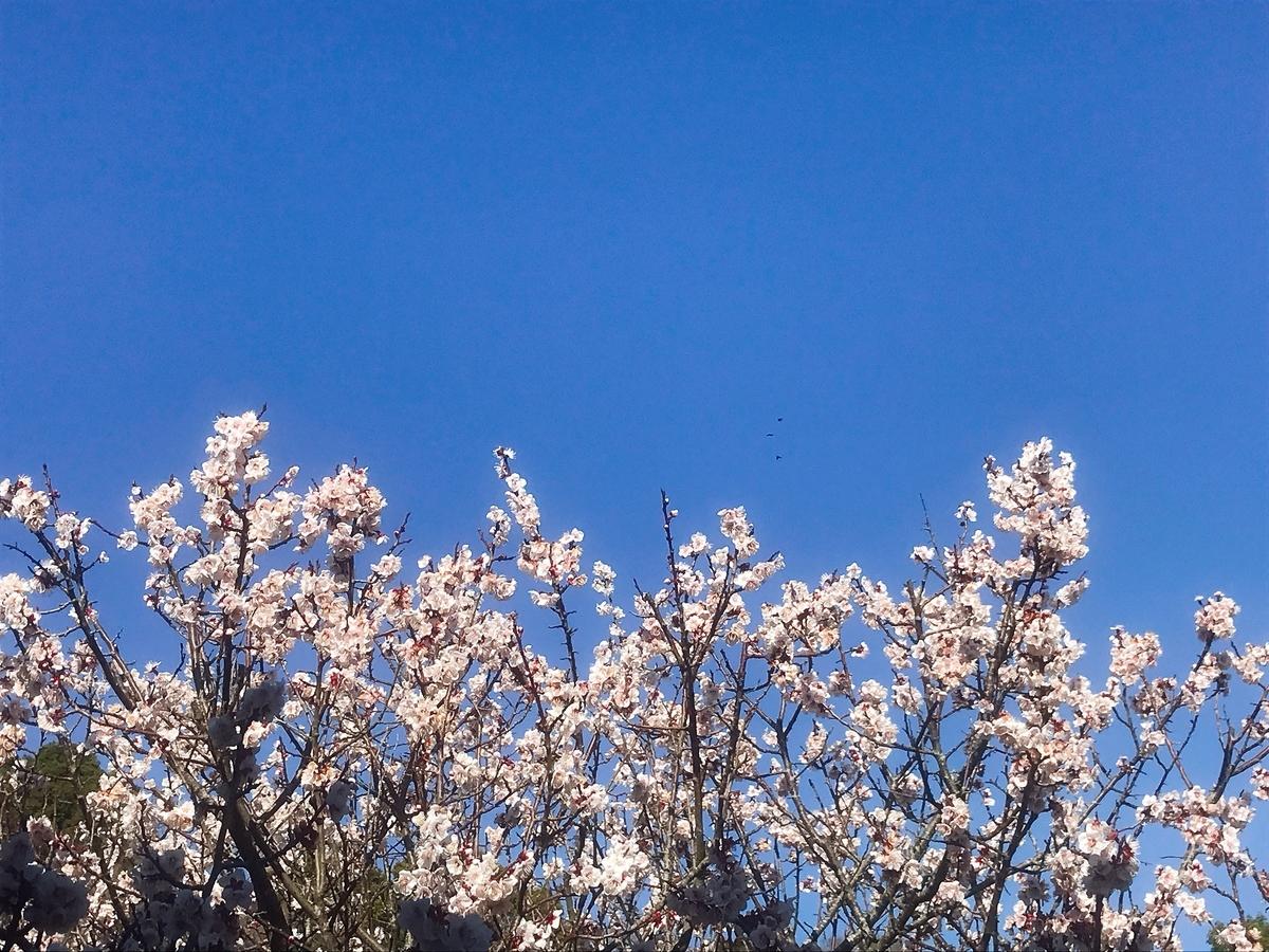 和歌山県植物公園 緑花センター内の梅の木