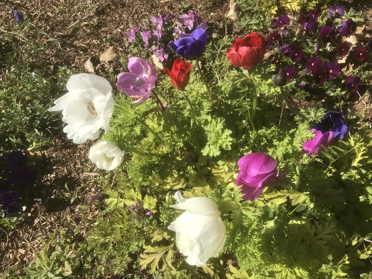赤や白・ピンク・紫の花