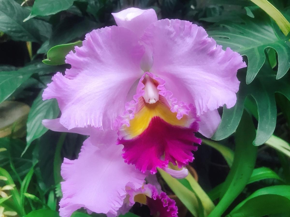 温室の中の花