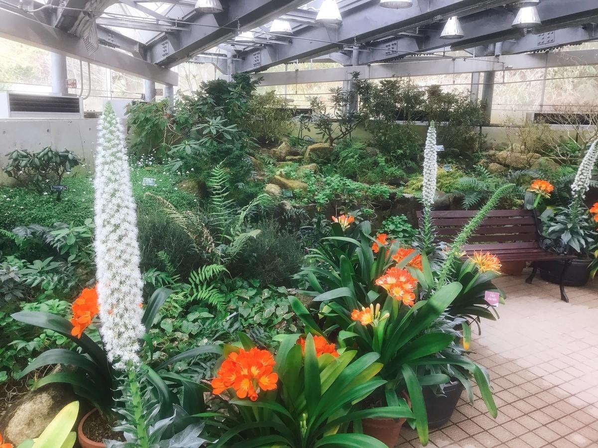 温室内の花
