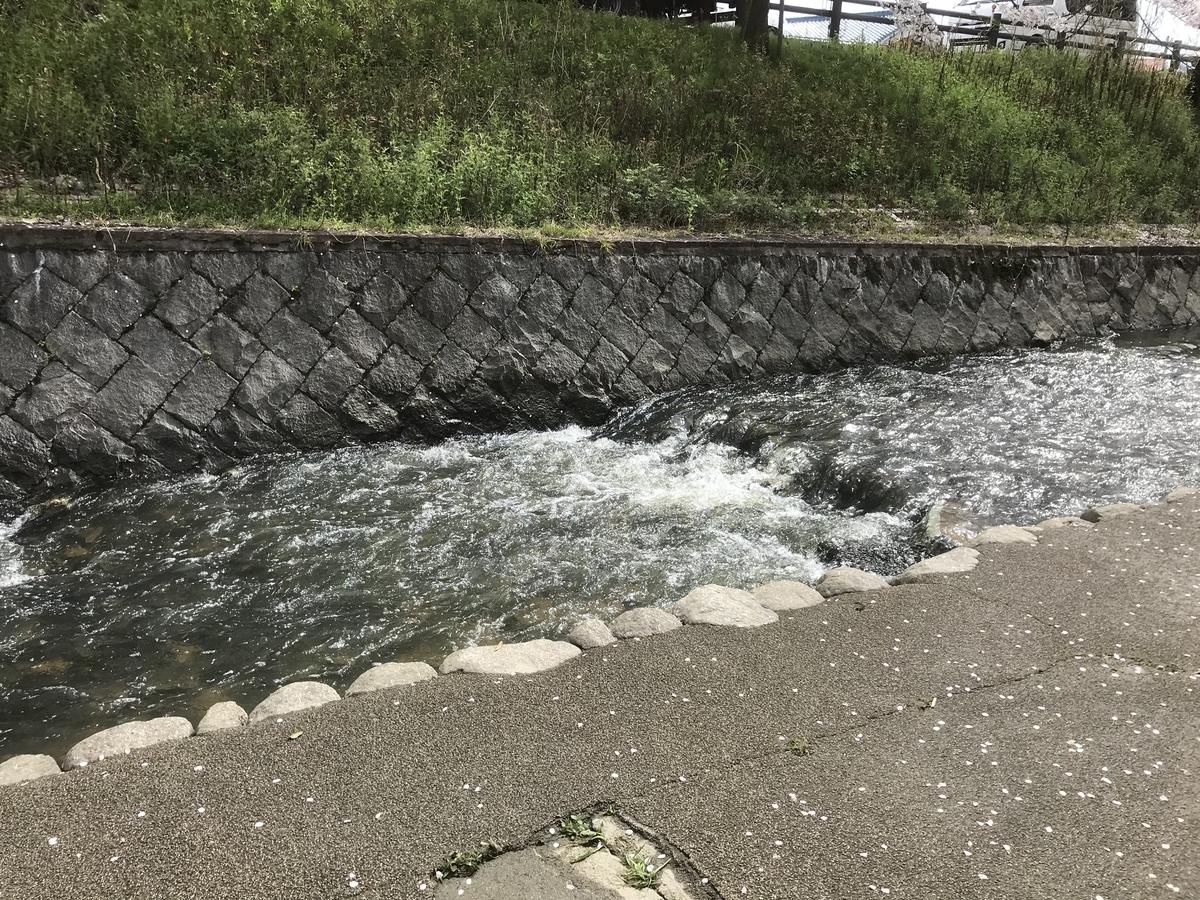 川に多くの魚が泳いでいました