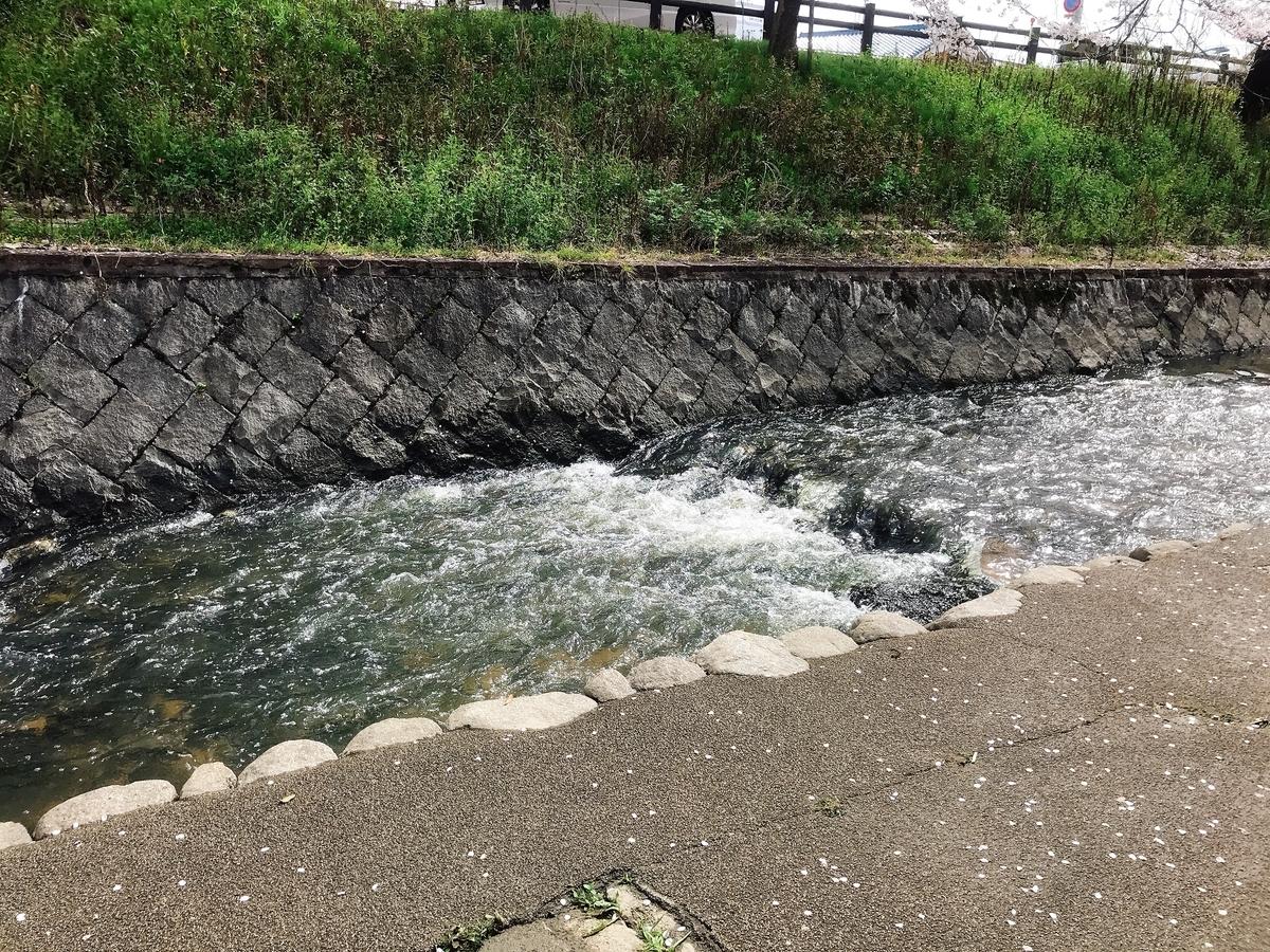 魚の習性なのか魚は水の流れに逆らって泳いでいました