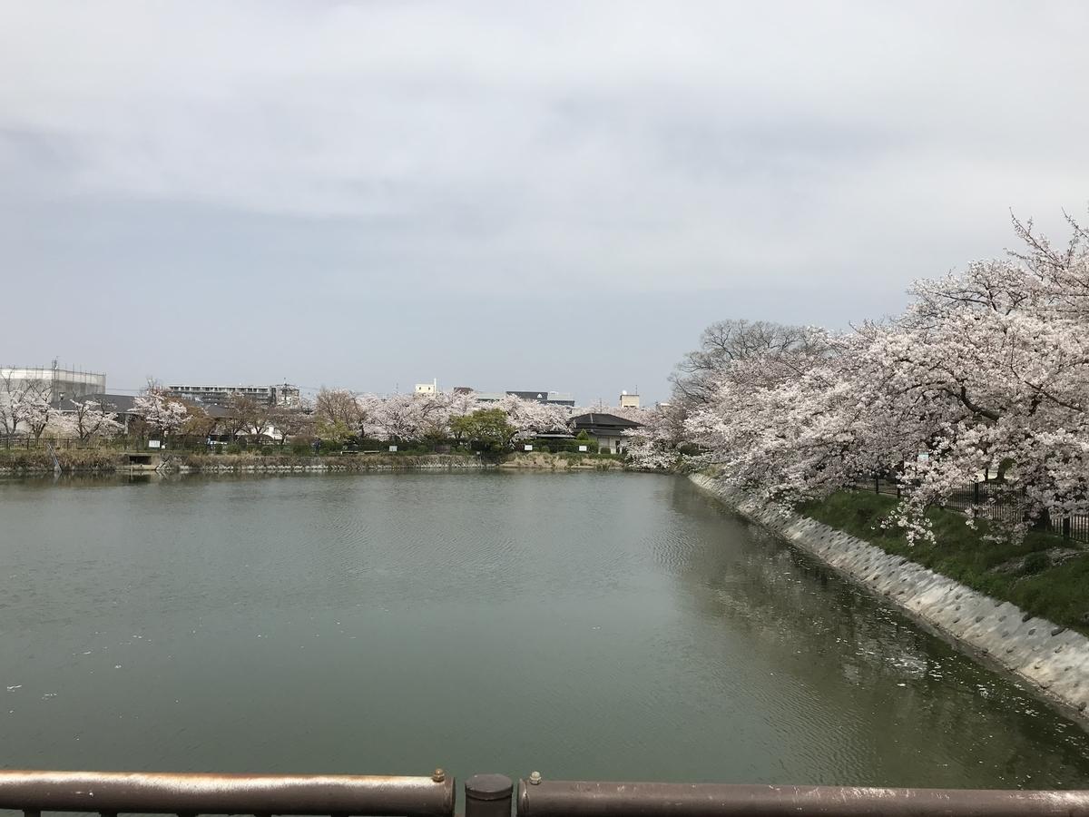 大中(おおなか)池と桜