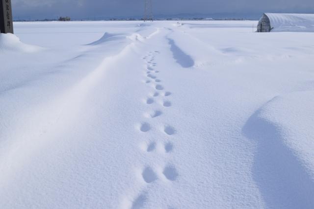 新雪の雪景色(山形県)