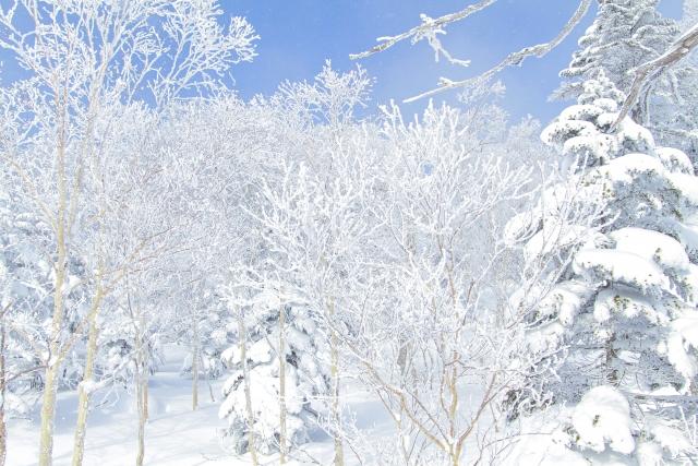 雪山 スキー場 バックカントリー