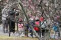 京都新聞写真コンテスト 梅林で記念写真