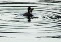 京都新聞写真コンテスト 沼にネッシーが・・・