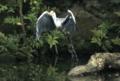 京都新聞写真コンテスト 立つ鳥、跡を濁さず