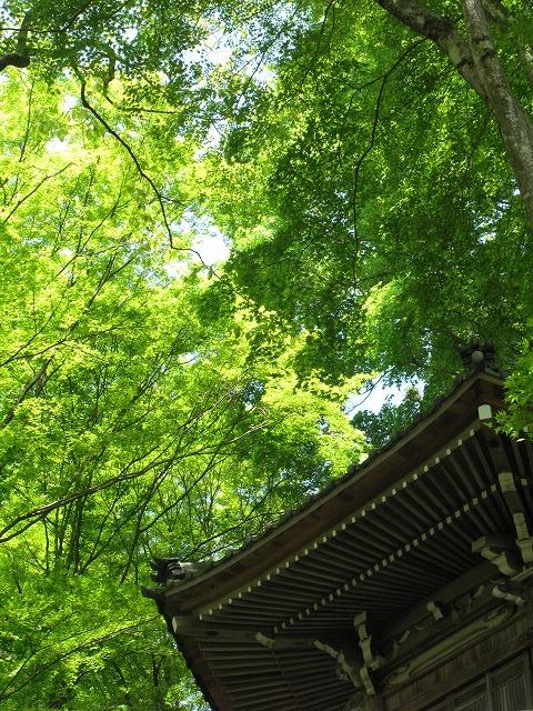 f:id:takagikofu:20130524164455j:image:w400