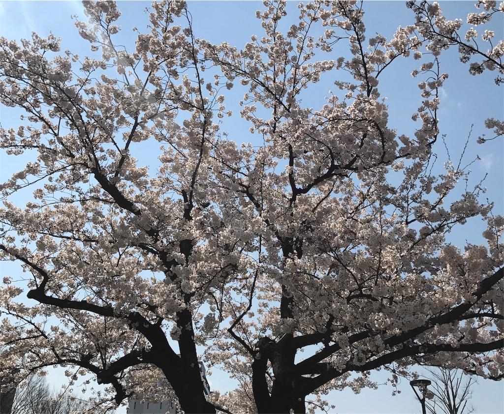 f:id:takahashi-real:20170404154056j:image