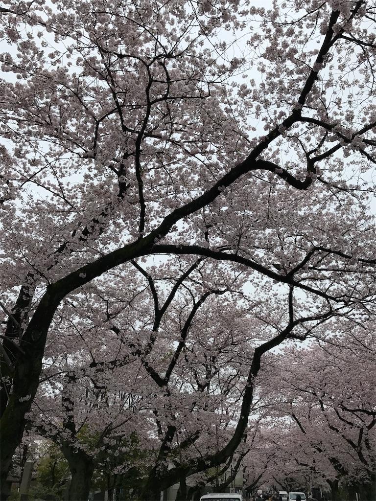 f:id:takahashi-real:20170408222656j:image