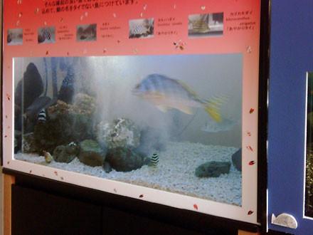 f:id:takahikonojima:20140914141906j:plain