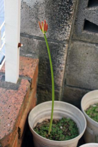 f:id:takahikonojima:20140927103219j:plain